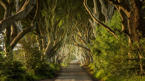 Irish countryside surrounds the Dark Hedges, and it's another of the magical places to visit in Ireland.